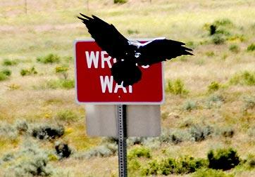 _jr31126-wrong-way-raven-sn.jpg