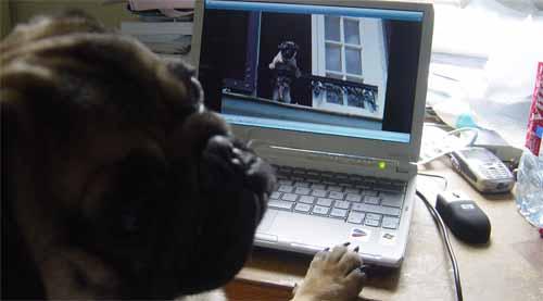 eatmyduck chien carlin geek