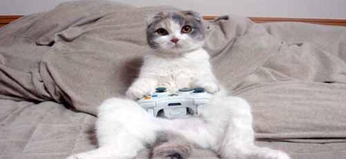 poor-cat.jpg